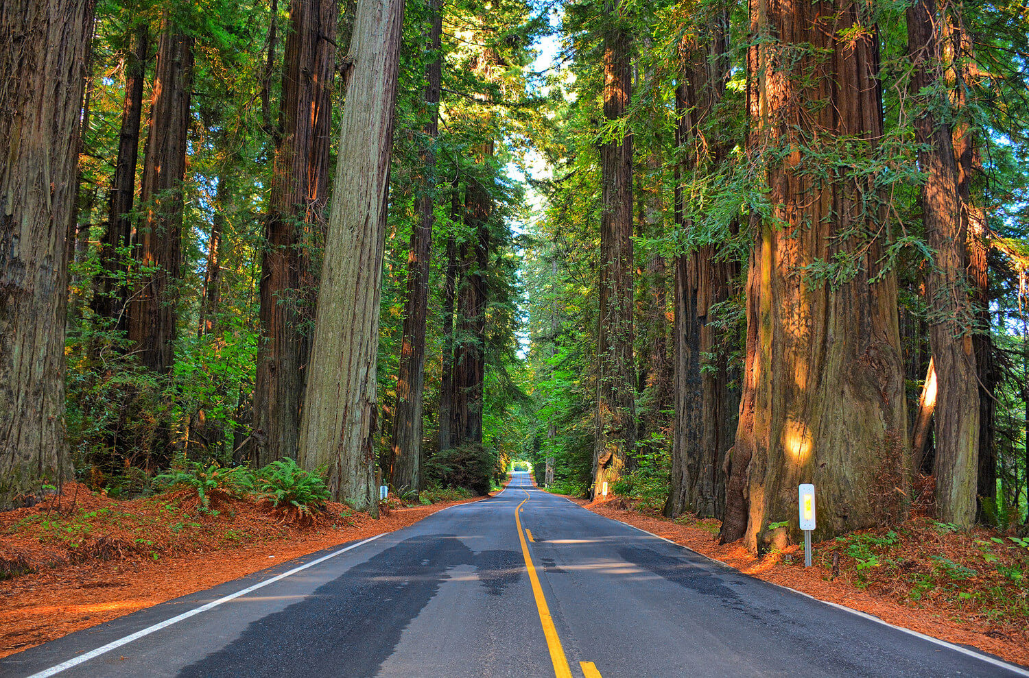 18 Tips for Reducing Your Car's Carbon Footprint
