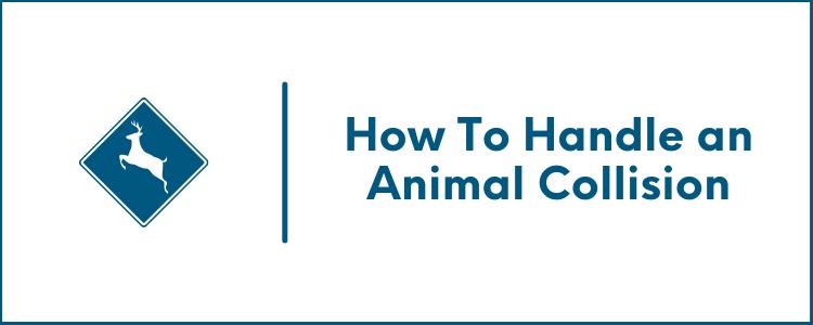 How To Handle an Animal Collision