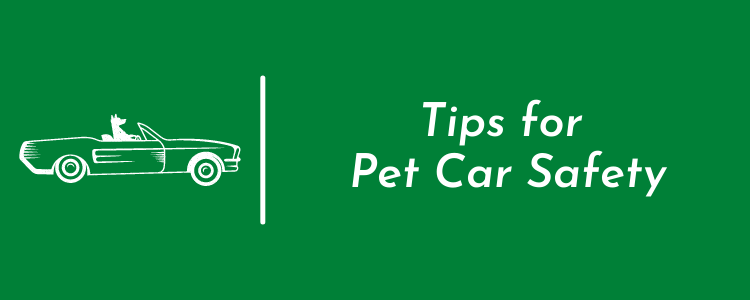 Tips for Pet Car Safety